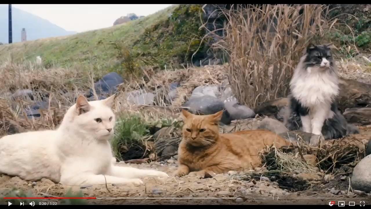 猫は抱くもののシーン2