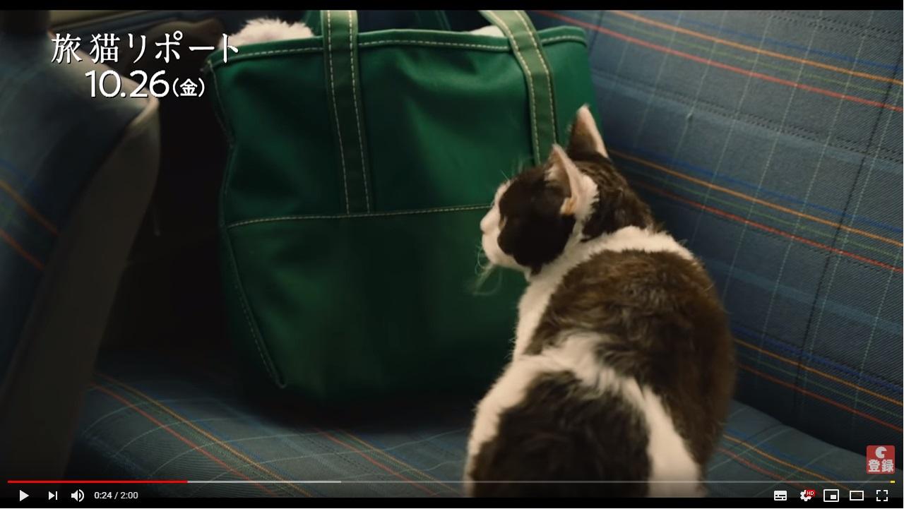 旅猫リポートのシーン1
