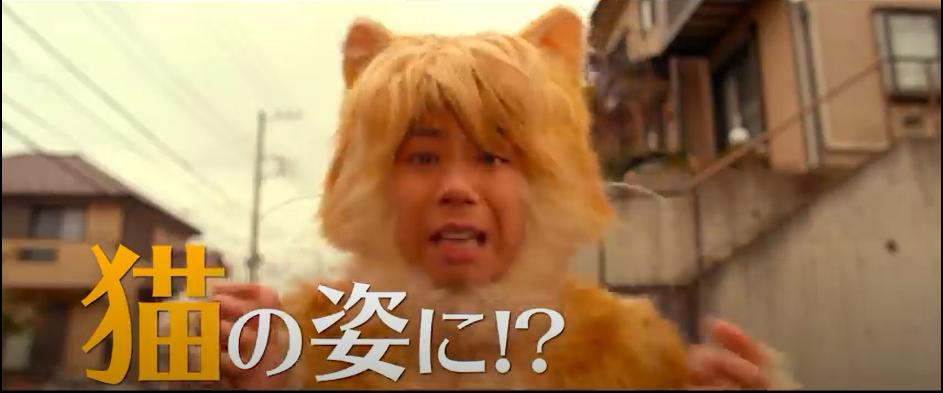 トラさん~僕が猫になったワケ~のシーン2