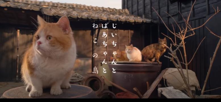 ねことじいちゃんのシーン1